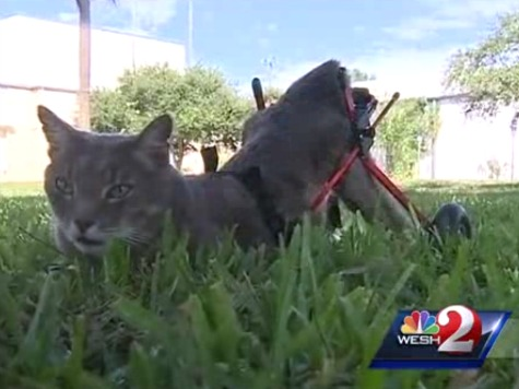 Woman Fined over $200 for Wheelchair Cat Without Leash