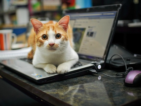 Dell Users Complain of Cat Pee Smell
