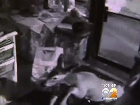 Deer Crashes Though Restaurant Window, Spends Night