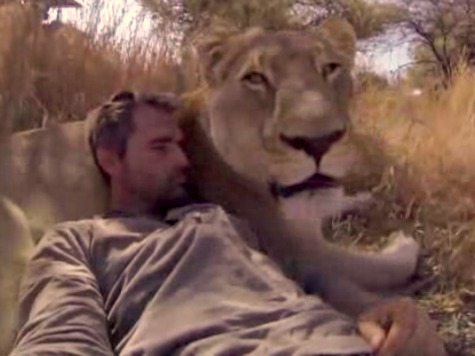 Watch: Lion Whisperer Hugs, Snuggles African Big Cats