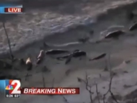 25 Dead Whales Wash Up Florida Shore