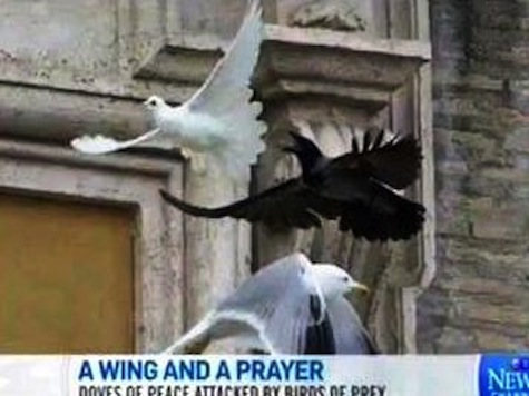 Pope's Peace Doves Instantly Attacked by Birds Of Prey