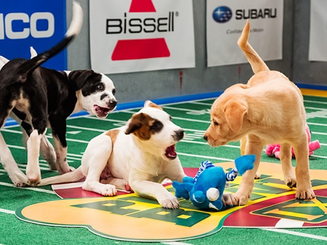 WATCH: Live Stream of Puppy Bowl 10