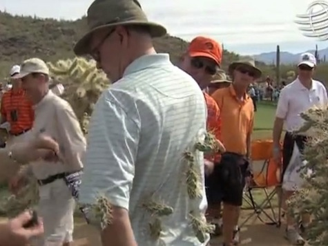 Man Falls into Cactus on Golf Course After Errant Rory McIlroy Shot