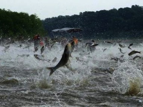 Dem State Senator: Calling A Fish From Asia An 'Asian Carp' Is 'Hurtful' and Offensive