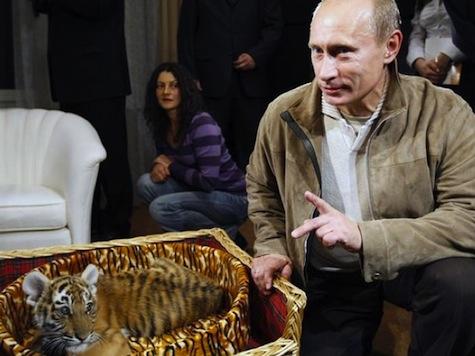 Report: Putin's Wild Tiger Invades China