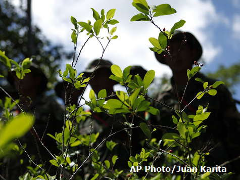 Coca Plants Discovered in Mexico For First Time
