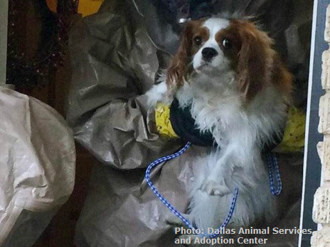 Bentley the Dog Tests Negative for Ebola Virus