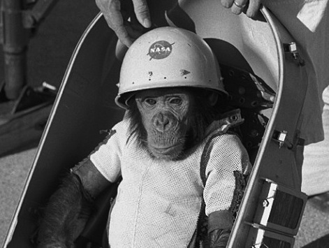 And THIS Is Why Monkeys Still Get Sent To Space