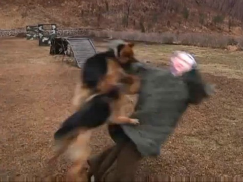 North Korean Propaganda Update: Dogs of War Edition