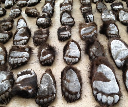 China Customs Officials Seize 213 Bear Paws