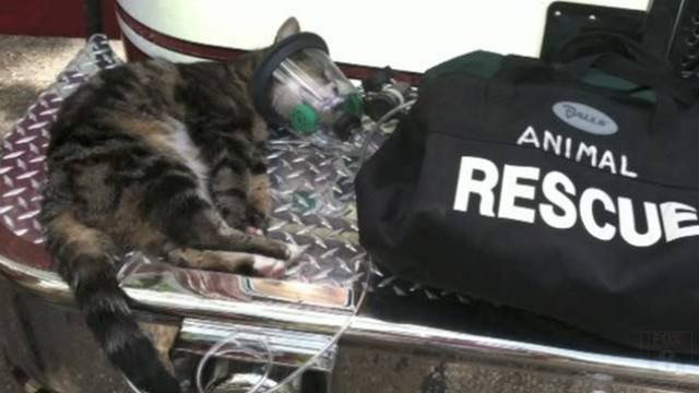 Firefighters Revive Cat with Oxygen Mask