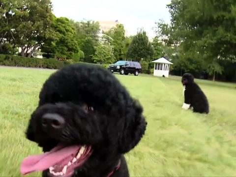 Humane Society Questions New WH Puppy: 'Why Not A Rescue Dog?'