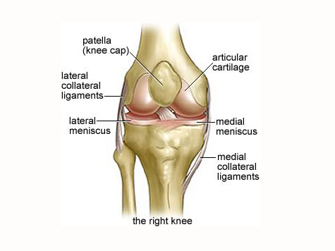 Doctors Discover New Knee Ligament
