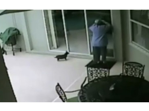 Cops: Woman Brought Dog To Burglary